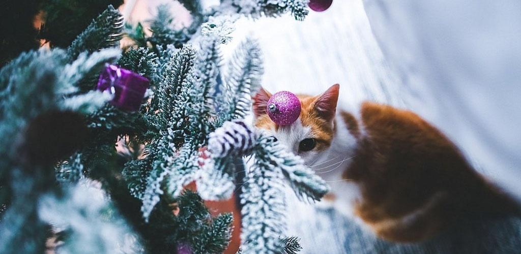 Dekoratorė patarė, kaip originaliai papuošti Kalėdų eglutę ir namus