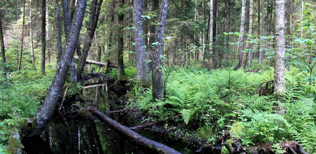 Ką slepia kertinės miško buveinės