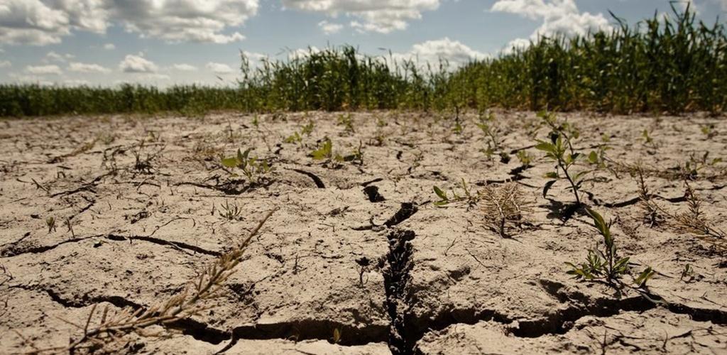 Vyriausybė atšaukė pernai dėl sausros paskelbtą ekstremalią situaciją